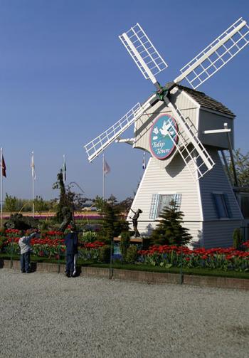 Tulipwindmill