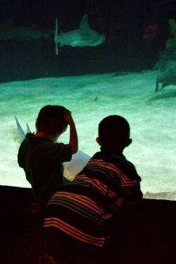 Aquarium_2